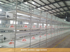 broiler rearing equipment