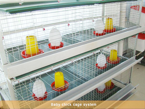 Automatic Pullet Chicken Cage System