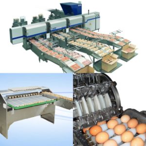 layer rearing equipment