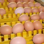 Things You Should Know The Cost Performance of Egg Collection Machine