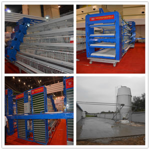 modern chicken breeding equipment