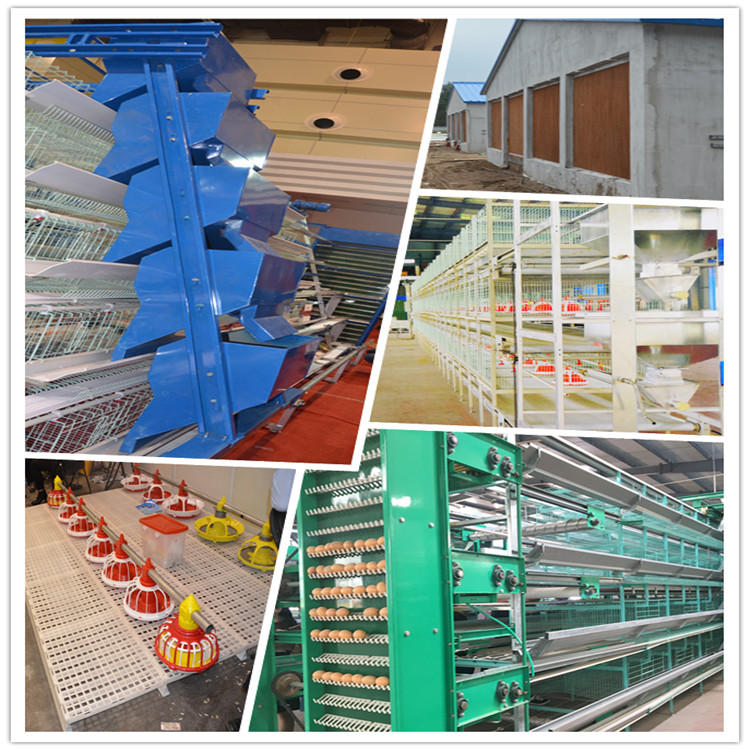poultry farming chicken equipment