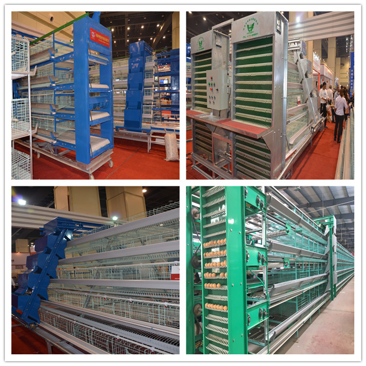 Four tiers of layer chicken cage is widely used in our industry.