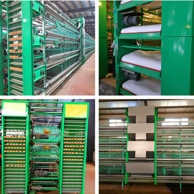Layer Cage System Installed Successfully In South Africa