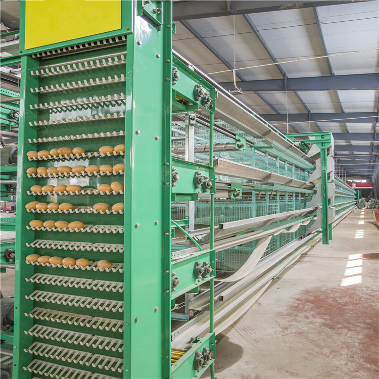 Automatic layer cage system with automatic egg collection system have the good design and advanced technology.