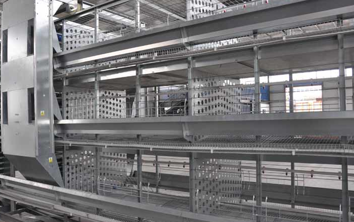 The broiler rearing equipment most adopt the H-type.
