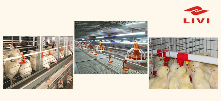 Poultry cage system in Livi Machinery are in good quality and great reputation.