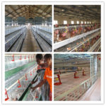 Good Poultry Breeding And Rearing Cages Equipment For Sale