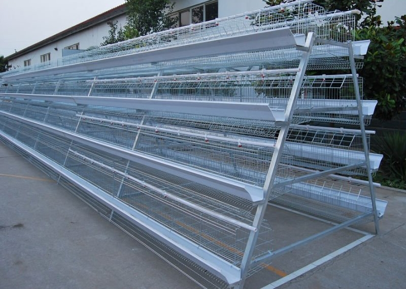 Chicken Farming Cages-A Low Cost Investment in Poultry Manufacturer