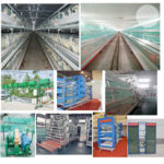 Wholesale Poultry Supplies for Chicken Cage System