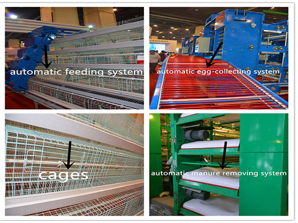 Two types of laying hen cage equipment  all have the accessories of poultry farming equipment supplies.