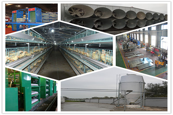 Chicken supplies are necessary equipment for poultry farming.