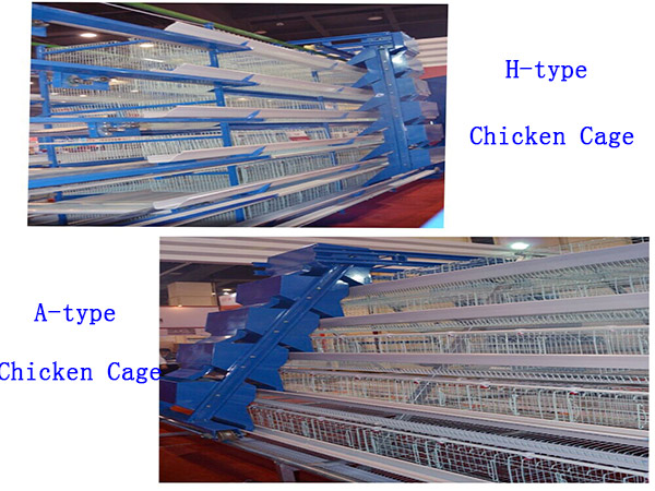 Livi Machinery have tow types of chicken cage for you to choose.