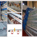 Poultry Cages For Sale ( Three Breeds of Chicken Cages for Sale )