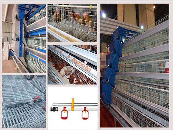 Chicken Cage equipment for sale are fit for large scale poultry farming.