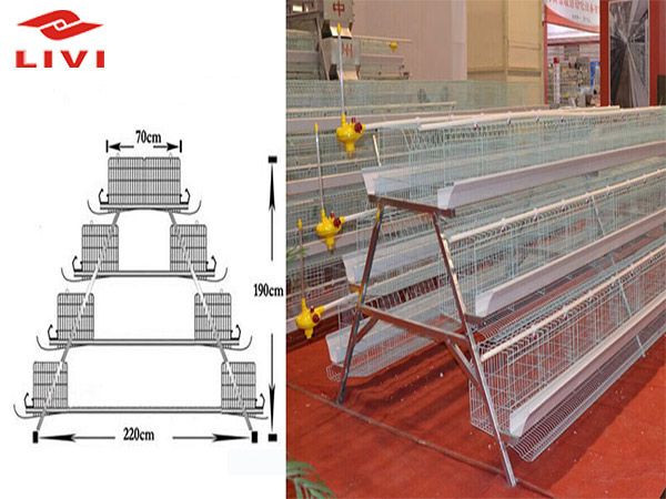 Poultry cages for pullet cage system are exquisite.
