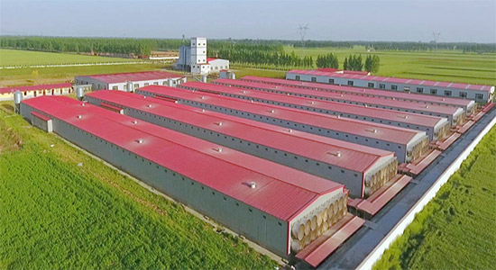 When you strat chicken farm, you hould choose a reliable poultry farming equipment manufacturer.