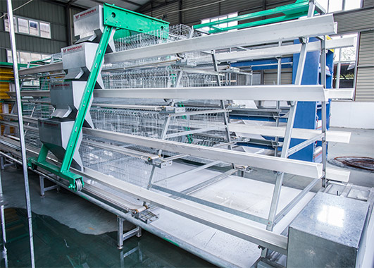 Poultry farm chicken cages for layers are dividewd into two types, the A type cage systems are low cost and easy to operate.