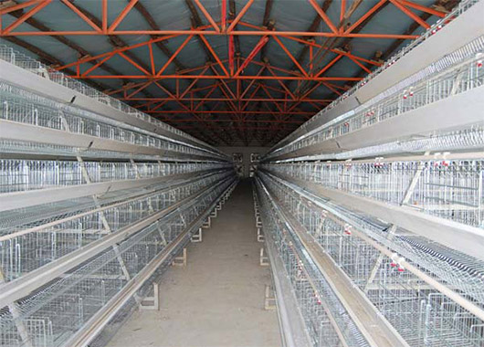 Chicken farm equipment for layers have two types. this is the A-type cage system.