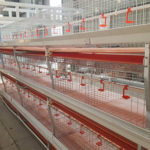Poultry Farming Equipment is As Important As Poultry Feed – You Deserve It