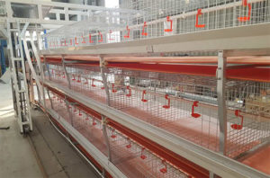 H-type chicken farm cage have the capacity of higher incubation rate and the breeding chickens can move without limitation.