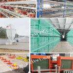 You Are Bound to Choose Following Chicken Cages Equipment for Sale in Your Chicken Farm