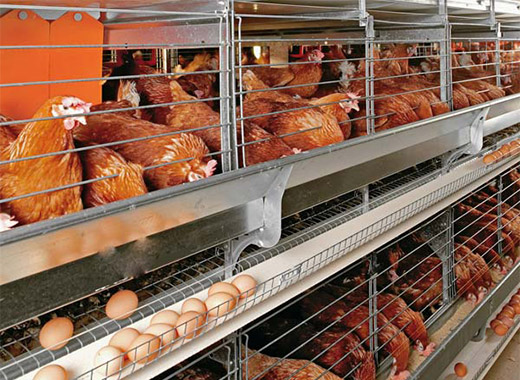 Equipment used in poultry farming industries for laying hens would be a farming trend.