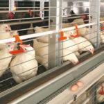 Automatic Poultry Cage of Layer Battery Cage For Sale