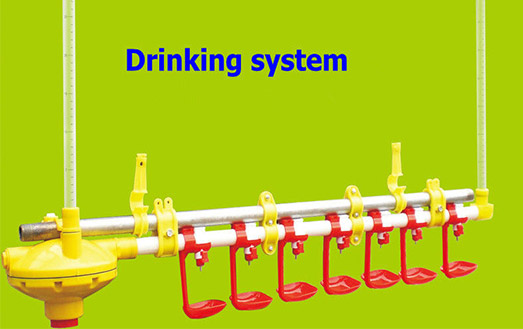 Poultry drinking system for laying hens in Livi Machinery ar in large supply, welcome to inquiry for it.