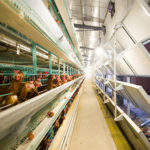 The Main Points To Prevent Disease When Using Poultry Farm Equipment