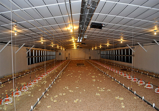 Baby chicken house ventilation system will greatly increase the circulation of air.