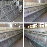 New Type Broiler Battery Cage and Related Equipment for Sale