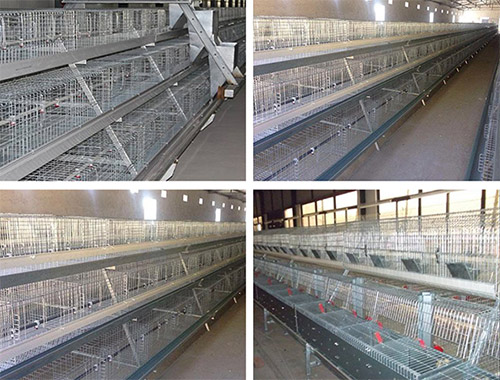 Livi automatic battery cage for broilers will be the poultry farm trend in your farms.