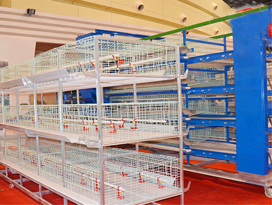 Battery cages for brooders in Livi Machinery can help yu increase the number of chickens and give you the best profitability.