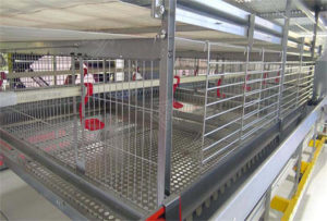 Details of broiler cage farming can definitely meet your chickens demands.