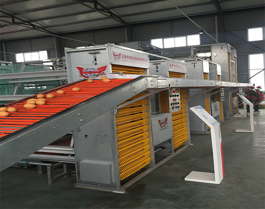 Chicken egg collecting machine can match up with different types of layer battery cages.