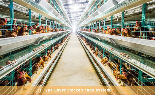 Automatic chicken cages for sale in Livi Machinery.