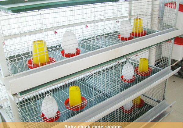chicken pullet battery cage